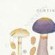 DÉTAILS 01 | Mycologie - Champignon - Cortinarius Pl.101