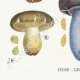 DÉTAILS 03 | Mycologie - Champignon - Cortinarius Pl.101