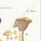 DÉTAILS 04 | Mycologie - Champignon - Cortinarius Pl.101