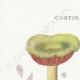 DETAILS 01 | Mycology - Mushroom - Cortinarius Pl.103
