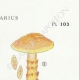 DETAILS 04 | Mycology - Mushroom - Cortinarius Pl.103