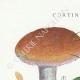 DÉTAILS 01   Mycologie - Champignon - Cortinarius Pl.104