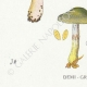 DETAILS 03   Mycology - Mushroom - Cortinarius Pl.105