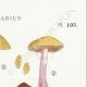 DETAILS 04   Mycology - Mushroom - Cortinarius Pl.105