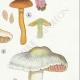 DETAILS 05   Mycology - Mushroom - Cortinarius Pl.105