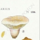 DÉTAILS 04 | Mycologie - Champignon - Cortinarius Pl.106