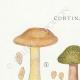 DÉTAILS 01 | Mycologie - Champignon - Cortinarius Pl.108