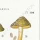 DÉTAILS 04 | Mycologie - Champignon - Cortinarius Pl.108
