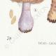 DÉTAILS 07 | Mycologie - Champignon - Cortinarius Pl.108