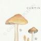 DETAILS 01 | Mycology - Mushroom - Cortinarius Pl.110