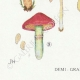 DETAILS 03 | Mycology - Mushroom - Cortinarius Pl.110