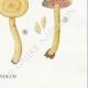 DETAILS 06 | Mycology - Mushroom - Cortinarius Pl.110