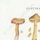 DETAILS 01   Mycology - Mushroom - Cortinarius Pl.111