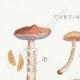 DETAILS 01 | Mycology - Mushroom - Cortinarius Pl.112