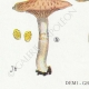 DETAILS 03 | Mycology - Mushroom - Cortinarius Pl.113