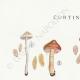 DÉTAILS 01 | Mycologie - Champignon - Cortinarius Pl.114