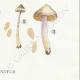 DÉTAILS 06 | Mycologie - Champignon - Cortinarius Pl.114