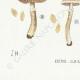 DÉTAILS 07 | Mycologie - Champignon - Cortinarius Pl.114