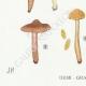 DETAILS 03 | Mycology - Mushroom - Cortinarius Pl.117