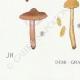 DETAILS 07 | Mycology - Mushroom - Cortinarius Pl.117