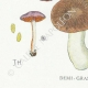 DETAILS 03   Mycology - Mushroom - Cortinarius Pl.118