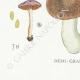 DETAILS 07   Mycology - Mushroom - Cortinarius Pl.118
