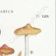 DÉTAILS 04 | Mycologie - Champignon - Cortinarius Pl.120