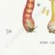 DETAILS 07 | Mycology - Mushroom - Cortinarius Pl.121