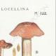 DETAILS 04 | Mycology - Mushroom - Cortinarius - Locellina Pl.122