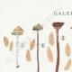 DETAILS 01   Mycology - Mushroom - Galera Pl.123