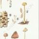 DETAILS 05   Mycology - Mushroom - Galera Pl.123
