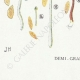 DETAILS 07   Mycology - Mushroom - Galera Pl.123