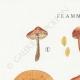 DÉTAILS 01 | Mycologie - Champignon - Flammula Pl.125