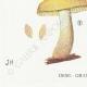 DÉTAILS 03 | Mycologie - Champignon - Flammula Pl.125