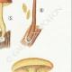 DÉTAILS 05 | Mycologie - Champignon - Flammula Pl.125