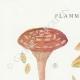 DÉTAILS 01   Mycologie - Champignon - Flammula Pl.126