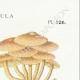 DÉTAILS 04   Mycologie - Champignon - Flammula Pl.126