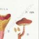 DÉTAILS 04 | Mycologie - Champignon - Flammula Pl.128