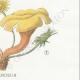 DÉTAILS 06 | Mycologie - Champignon - Flammula Pl.128