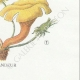 DÉTAILS 08 | Mycologie - Champignon - Flammula Pl.128