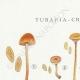 DÉTAILS 01 | Mycologie - Champignon - Tubaria - Crepidotus Pl.130