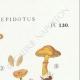 DÉTAILS 04 | Mycologie - Champignon - Tubaria - Crepidotus Pl.130