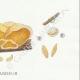 DÉTAILS 06 | Mycologie - Champignon - Tubaria - Crepidotus Pl.130