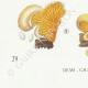 DÉTAILS 07 | Mycologie - Champignon - Tubaria - Crepidotus Pl.130