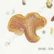 DETAILS 03 | Mycology - Mushroom - Paxillus Pl.133