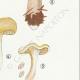 DETAILS 05 | Mycology - Mushroom - Paxillus Pl.133