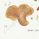 DETAILS 07 | Mycology - Mushroom - Paxillus Pl.133