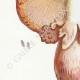 DÉTAILS 02 | Mycologie - Champignon - Psalliota Pl.134