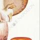 DÉTAILS 05 | Mycologie - Champignon - Psalliota Pl.134