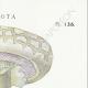 DETAILS 04 | Mycology - Mushroom - Psalliota Pl.136